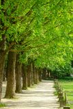 Зеленые деревья в парке на Namiseom стоковая фотография rf