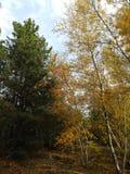Зеленый желтый лес осени стоковые фотографии rf