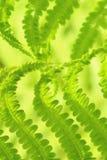 Зеленый конец картины лист папоротника вверх по альбомному формату стоковая фотография