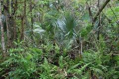 Зеленое болото во Флориде с упаденными деревьями стоковое изображение