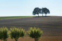 Земли космоса экземпляра аграрные с деревьями стоковое фото