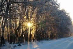 Зима. Солнце светит сквозь деревья. stock photos