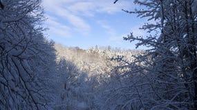 зимний лес в солнечном освещении royalty free stock images