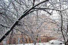 зимний пейзаж. Trees covered with first snow Stock Photography