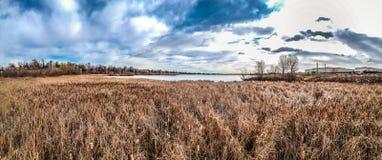 Злаковик и озеро стоковая фотография rf