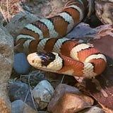 Змейка на зоопарке стоковое фото rf