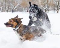 Игра собак друг с другом стоковые фото