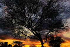 Изумляя заход солнца, silhouetted дерево стоковая фотография rf