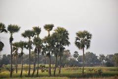Изображение красивых джунглей где некоторые пальмы стоковое фото