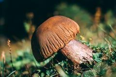 Изображение старого гриба стоковые фото