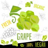 Иллюстрации свежей зрелой руки вектора еды vegan плодов виноградин виноградины органической вычерченные иллюстрация штока