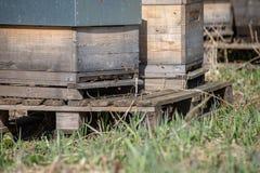 инвентарь держать пчелы, дома пчелы стоковое изображение