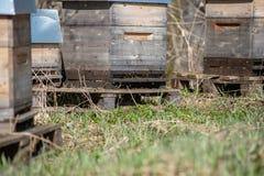 инвентарь держать пчелы, дома пчелы стоковое фото rf