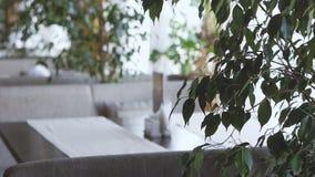 Интерьер ресторана Комната загорена ярким дневним светом из окна видеоматериал
