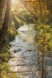 Идилличная заводь на восходе солнца стоковые фотографии rf