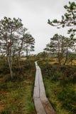 Идя путь в болоте стоковое изображение rf