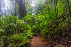 Идя след в субтропическом тропическом лесе - Австралии стоковое изображение rf