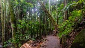 Идя след в субтропическом тропическом лесе - Австралии стоковые фотографии rf