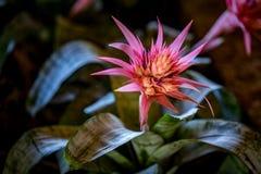 Кактус и цветки, Мексика стоковые фотографии rf