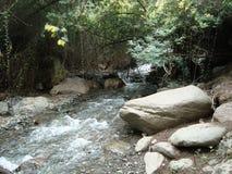 Камни леса реки мочат зеленый цвет стоковые изображения rf