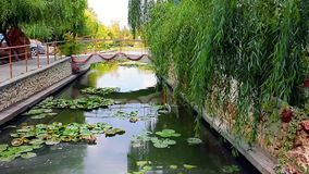 Канал с лилиями воды сток-видео