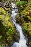 Каскад воды через мох покрыл утесы в Новой Зеландии стоковое изображение