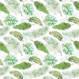 Картина тропического зеленого monstera безшовная с белой предпосылкой Покрашенная вручную иллюстрация акварели иллюстрация штока