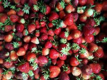 клубника первая, strawberry strawberry, fruit, red,market, berries, fruits stock photo