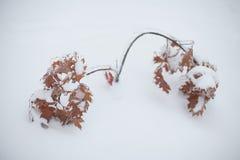 зима Royalty Free Stock Photos