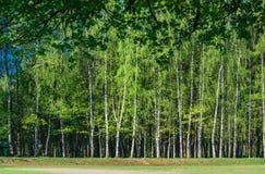 Край леса на летний день стоковая фотография