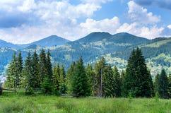 край леса леса, с загородкой стоковые изображения