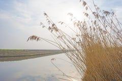 Край туманного озера с тростником в солнечном свете стоковая фотография rf