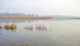 Край туманного озера с тростником в солнечном свете стоковое фото rf