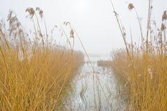 Край туманного озера с тростником в солнечном свете стоковое изображение