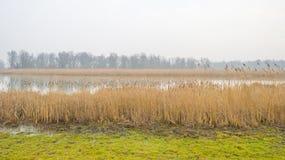 Край туманного озера с тростником в солнечном свете стоковое изображение rf