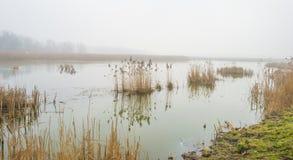 Край туманного озера с тростником в солнечном свете стоковое фото