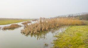 Край туманного озера с тростником в солнечном свете стоковые изображения rf