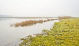 Край туманного озера с тростником в солнечном свете стоковая фотография