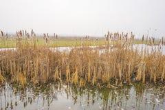 Край туманного озера с тростником в солнечном свете стоковые изображения