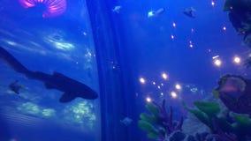 Красивая акула и различные виды рыб плавая в большом аквариуме сток-видео