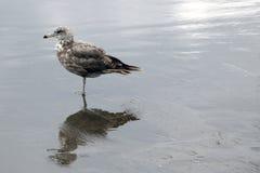 Красивая чайка стоит на побережье моря или океана стоковые фотографии rf