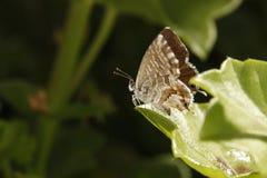 красивейший фотоснимок листьев парника бабочки стоковое изображение