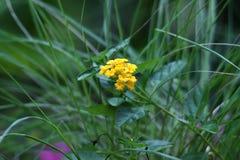 Красивые желтые цветки в цветени стоковое изображение rf