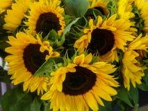 Красивые декоративные солнцецветы используемые для делать букеты стоковое фото