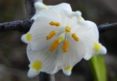 Красивые цветки весны после спячки стоковые изображения