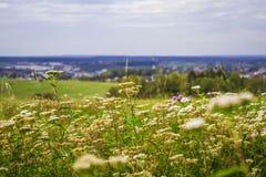 Красивый вид цветков и зеленое поле в Германии осенью Природа greens Травы и заводы стоковые изображения rf