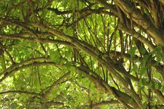 Красивый ландшафт с картинами ветви тропический тропический лес стоковая фотография