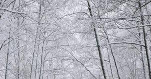 Красивый лиственный лес Snowy зимы во время дня пурги Snowy видеоматериал