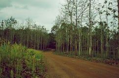 Красная дорога гравия водя к лесу teak стоковое изображение