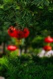 Красные праздничные китайские фонарики висят на пушистой зеленой рождественской елке стоковое изображение